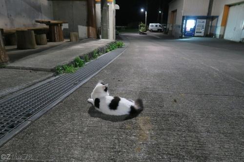 青ヶ島の夜と猫