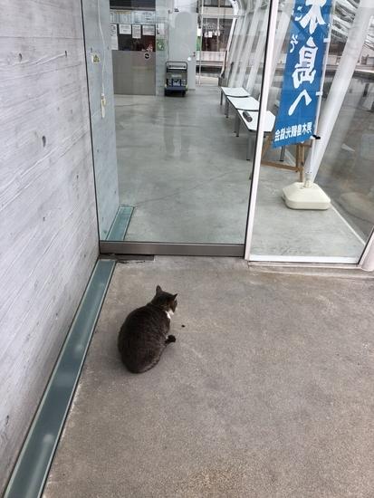 男木島の魂」の前で観光客を出待ちする猫