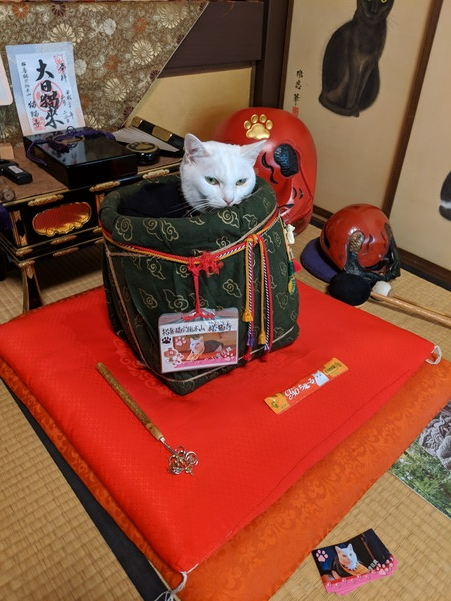 やっぱりキツい目つきの猫住職