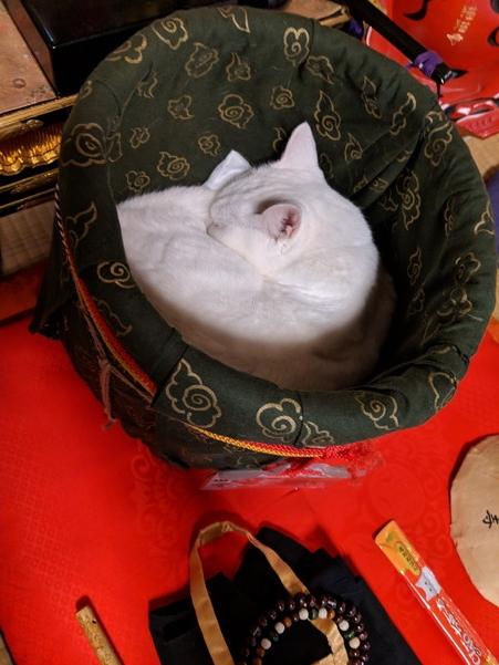 猫住職の寝姿