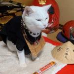 猫猫寺の小雪住職