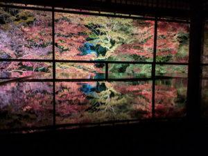 瑠璃光院の夜間特別拝観で見た紅葉のライトアップが幻想的すぎる