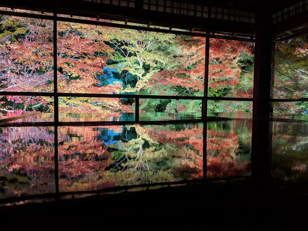 瑠璃光院の夜間特別拝観で見た紅葉のライトアップ写真