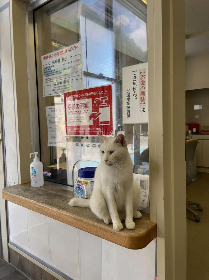 相島渡船待合所入り口には白猫ちゃんがお出迎えしてくれました
