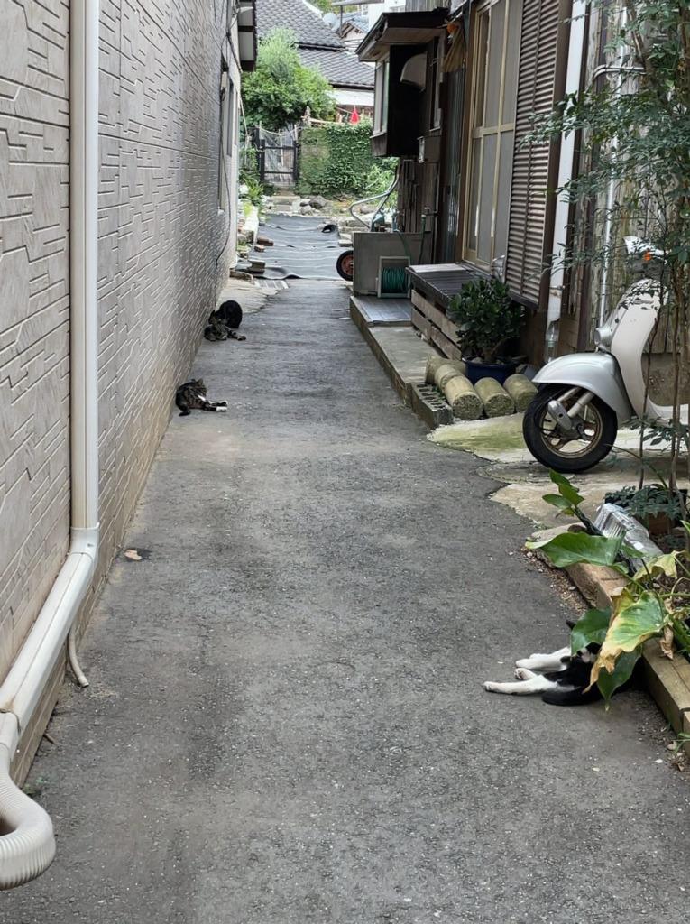 日陰で休む相島猫