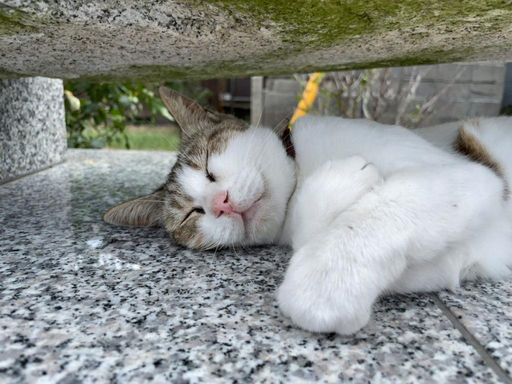 相島のウィッシュ猫