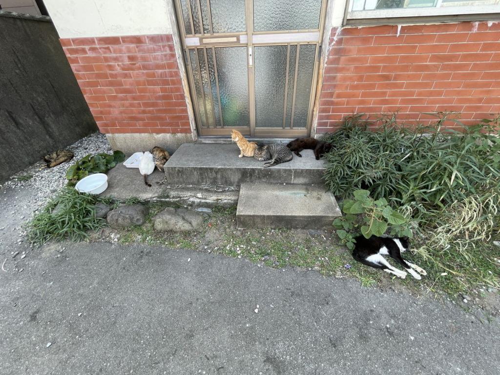 相島の民家前で餌とお水が提供されていました