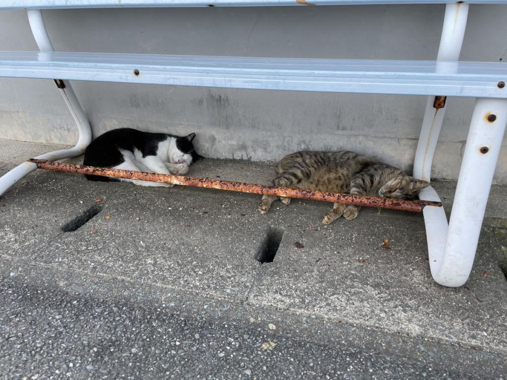 ベンチの下で寝る相島の猫ちゃんたち