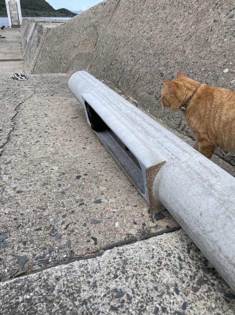 配管に首を突っ込む相島の黒猫を見つめる茶トラ