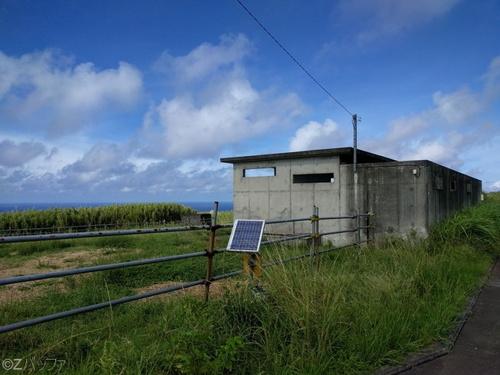青ヶ島の牧場