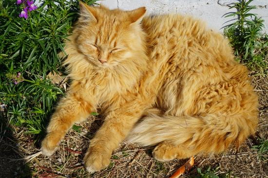 男木島にいたモフモフ猫