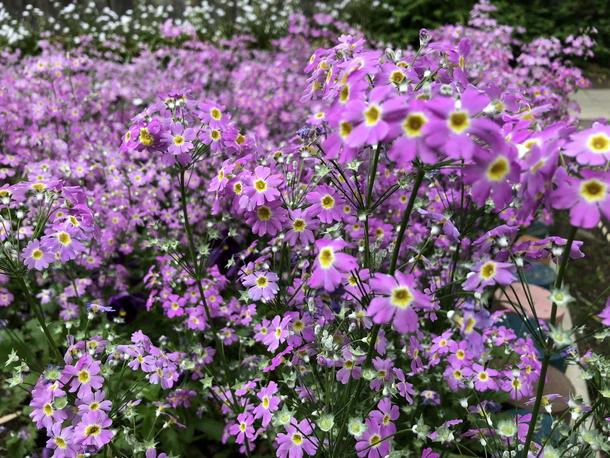 iPhone 8で撮影した花の写真