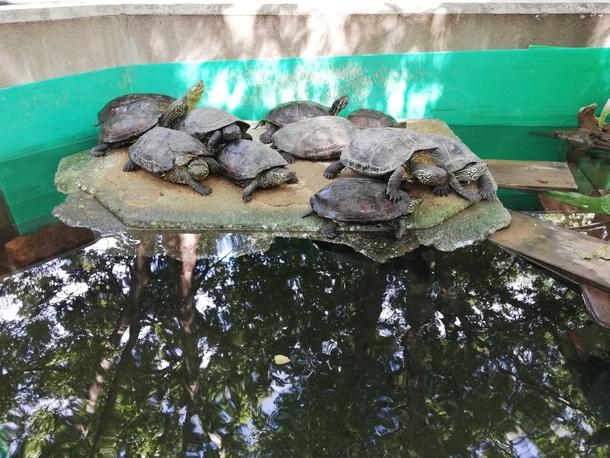 P20 liteのカメラで撮影した動物園の亀たち