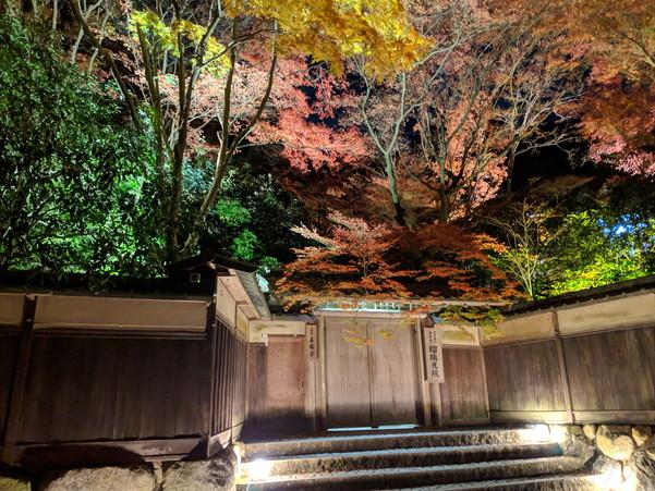 瑠璃光院の門前からライトアップされた景色