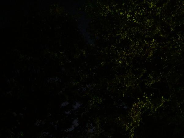 Pixel 3を用いた通常のHDR+撮影では殆ど何も見えない