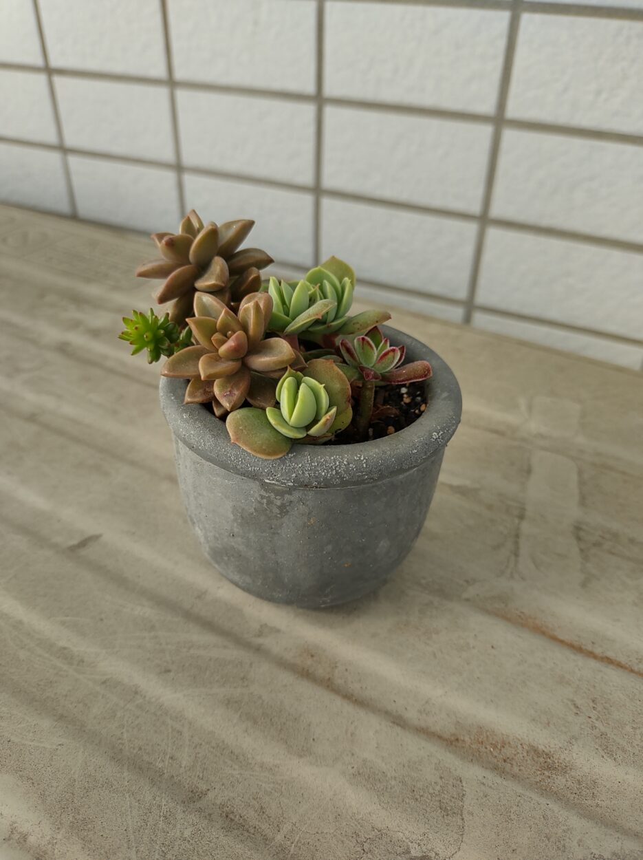 Rakuten Handで撮影した植物